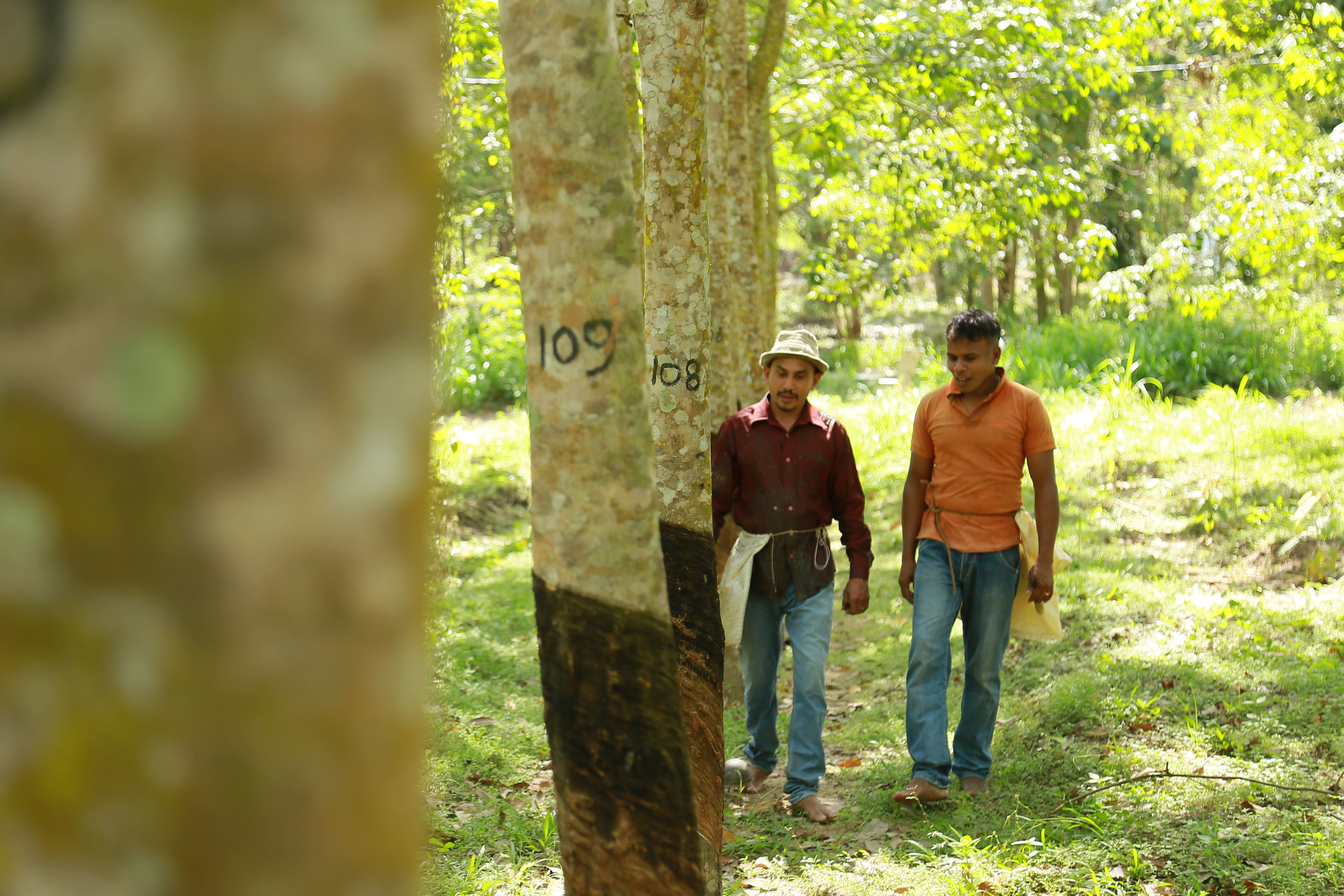GRI Enhances Connections with Rubber Farmers Image